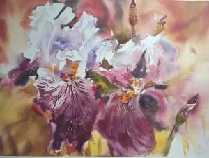 Les iris (2)